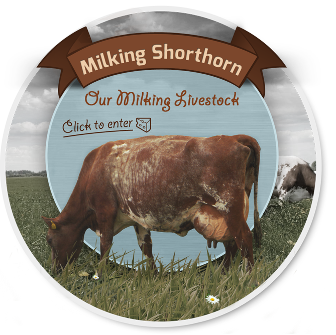 Milking Shorthorn Society
