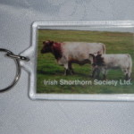 Irish Shorthorn Society Keyring €5.00