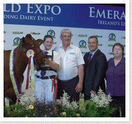 Show Results Irish Shorthorn Society