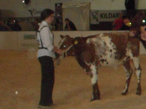 Ebony Hession making her debut in the showring at the National Calf Show in Cillin Hill