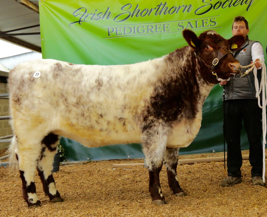 Topped Priced animal Ricketstown Milicent Kim
