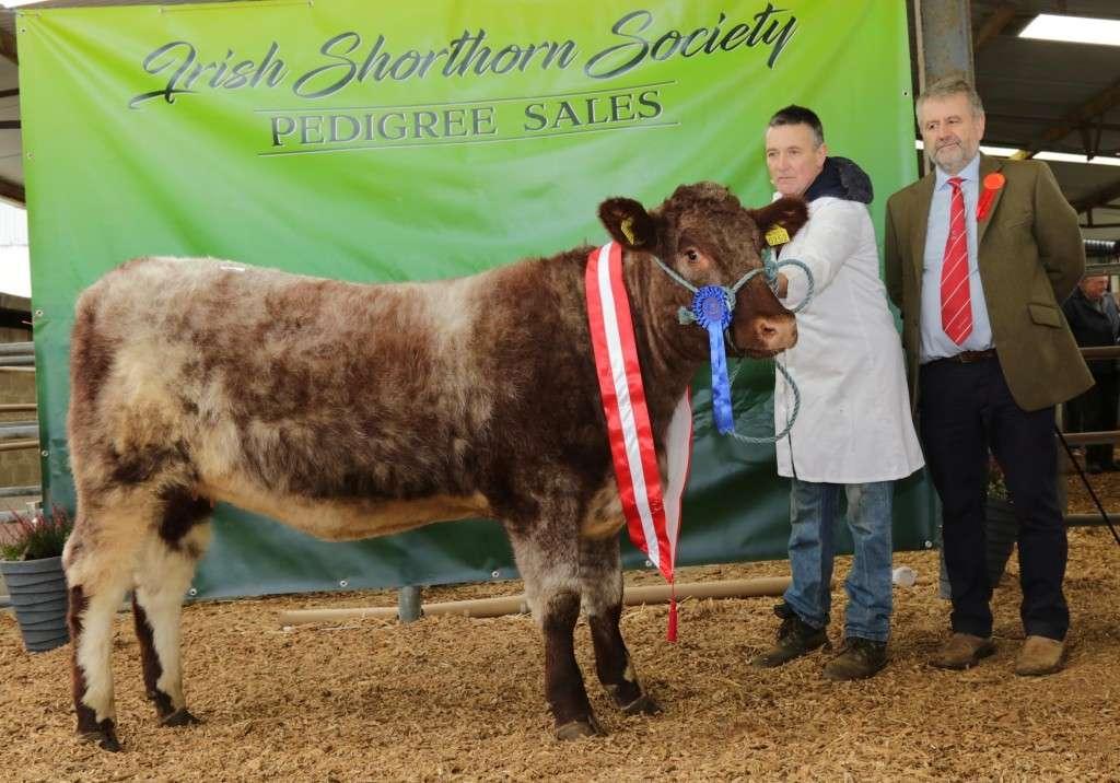 Premier Sale 2017 Reserve Champion Female Ardnaskea Dolly 2nd with Pat Hehir.